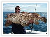 Regal Port Douglas holiday accommodation resort with game fishing in The Great Barrier Reef.